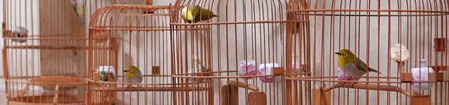 Bewegte Vögel